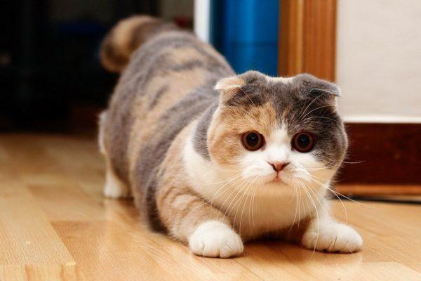 giair mã giấc mơ thấy mèo