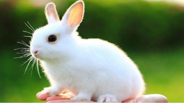 Giấc mơ thấy thỏ có điềm báo gì? Đánh con gì?