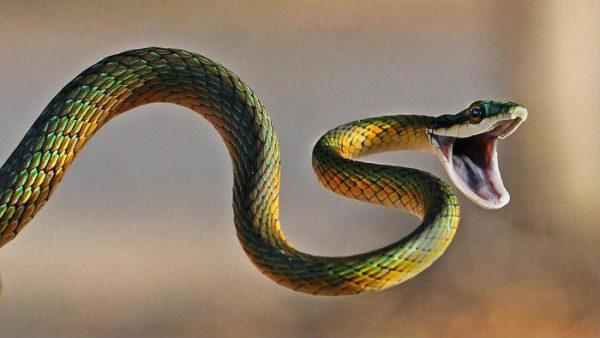 Giải mã giấc mơ thấy rắn điềm gì?