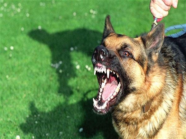 Mơ thấy bị chó cắn là điềm gì?