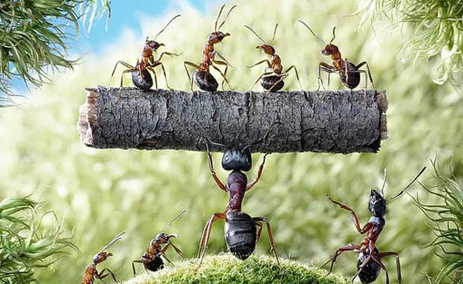 mơ thấy đàn kiến điềm báo gì