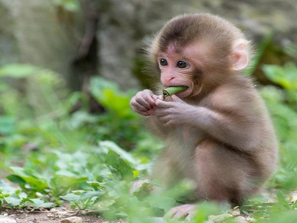 Mơ thấy khỉ điềm báo gì?
