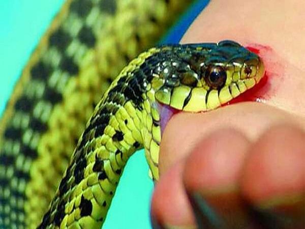 mơ thấy bị rắn cắn báo hiệu điềm gì