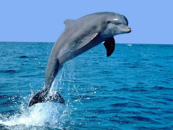 mơ thấy cá heo điềm báo gì