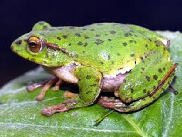 mơ thấy ếch đánh con gì