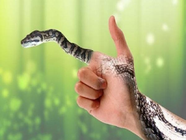 Mơ thấy bắt rắn điềm báo gì? Chiêm bao về số nào?