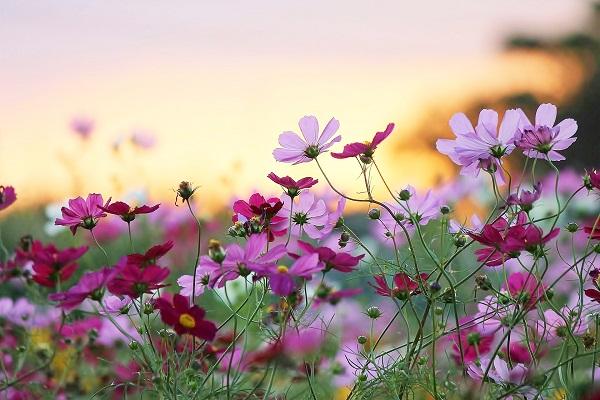 Mơ thấy bông hoa điềm gì?