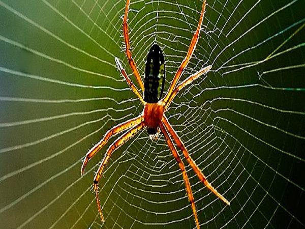 Mơ thấy con nhện đánh số nào?