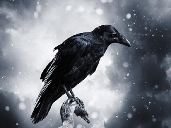 Mơ thấy con quạ có điềm báo gì?