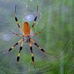 mo thấy nhện