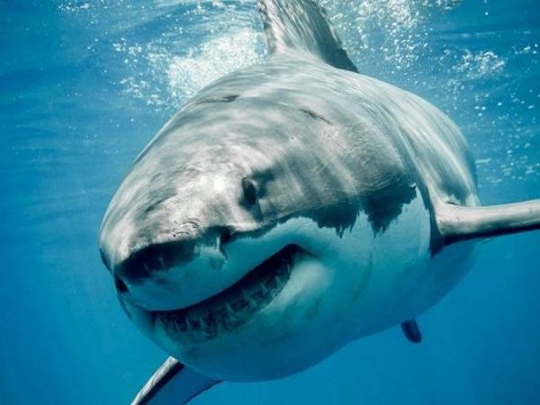 Mơ thấy cá mập có điềm báo gì? Đánh số nào?